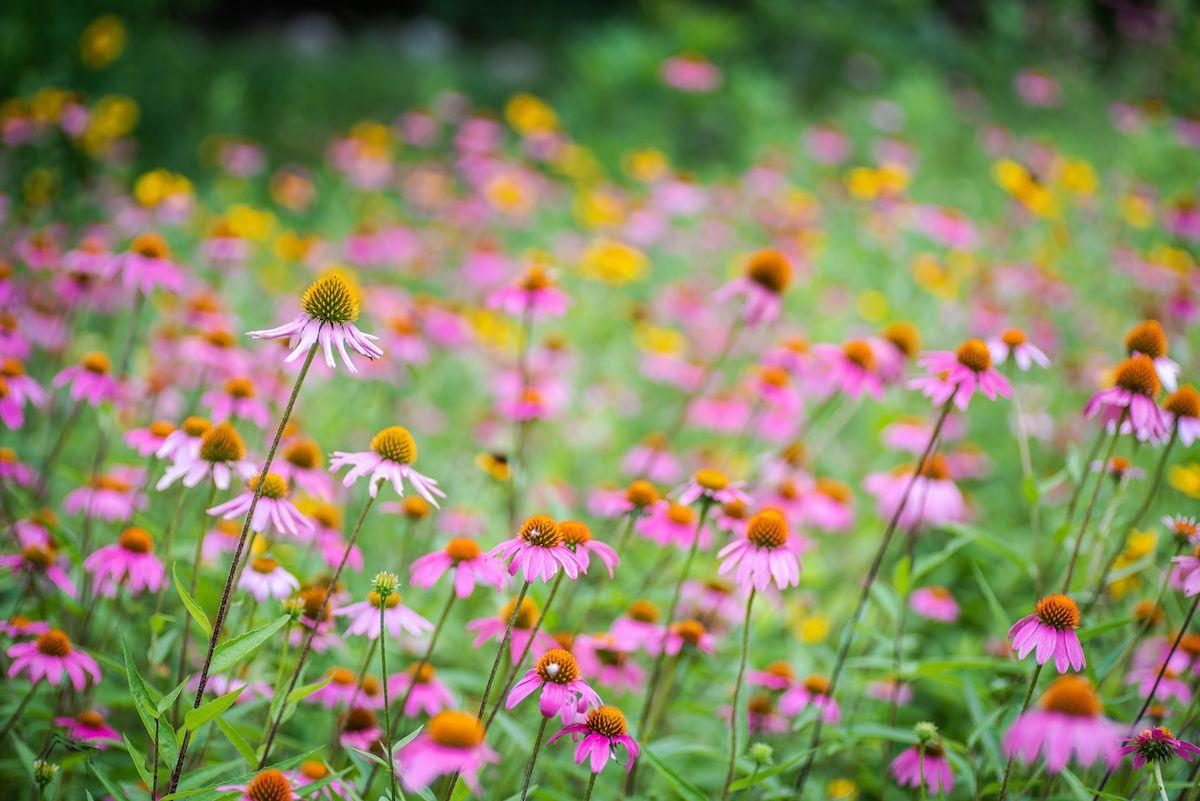 How to help garden survive Texas heat