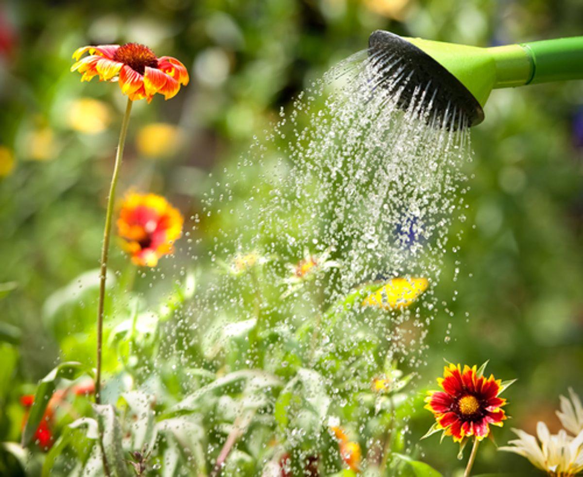 Garden Design Watering Tips for American Legend Gardeners