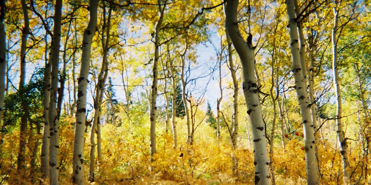 Best places in Northern Colorado for fall photography