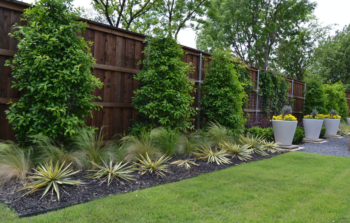 Great year-round plants for your American Legend garden in Texas