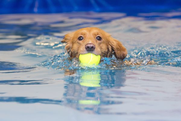 Three end-of-summer dog splash events for Belclaire families