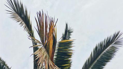 Ocean Isle Beach Photo-10