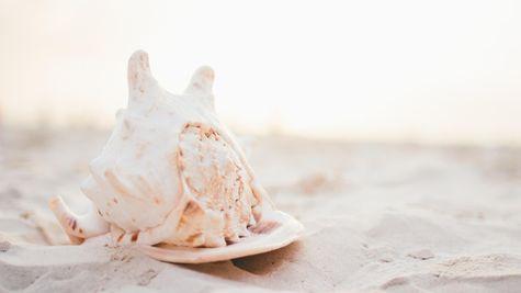 Ocean Isle Beach Photo-8