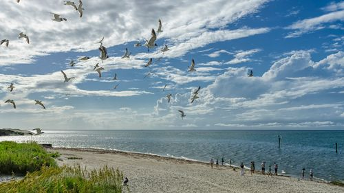 Eastern North Carolina beach with family and seagulls