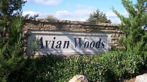 avian_woods.jpg