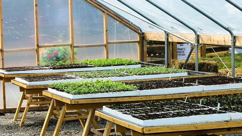 Seedlings in Hoop House Chickahominy Falls 55+ Agrihood
