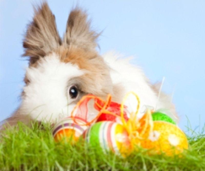 Easter Egg Hunts near Birmingham Neighborhoods