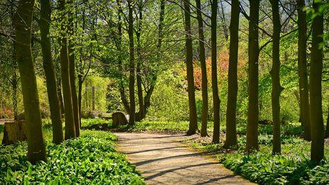 Woodland Preserve