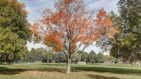 Oregon, WI Park near Autumn Ridge by Tim O'Brien Homes